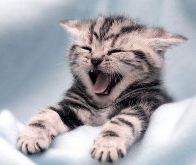 cats funny laugh