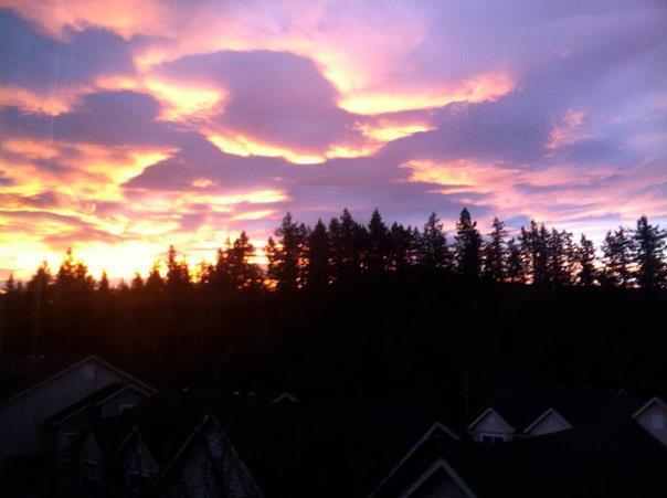 orange pink and purple sunrise behind evergreen tree silhouettes