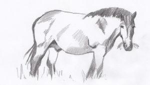 Fettes Pferd