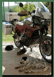 Aprilia Caponord ETV1000 Rally-Raid - good shade for the animals!