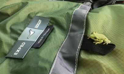 Luckily I found that little guy before rolling up my tent