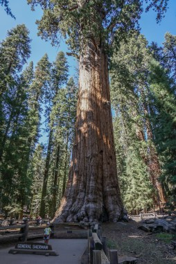 Huge General Sherman Tree (watch the kid that stands quite far away from the tree)