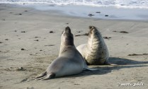 Elephant seals in Big Sur. Some didn't like each other...