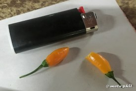 Two small mexican yellow chilis next to a small lighter
