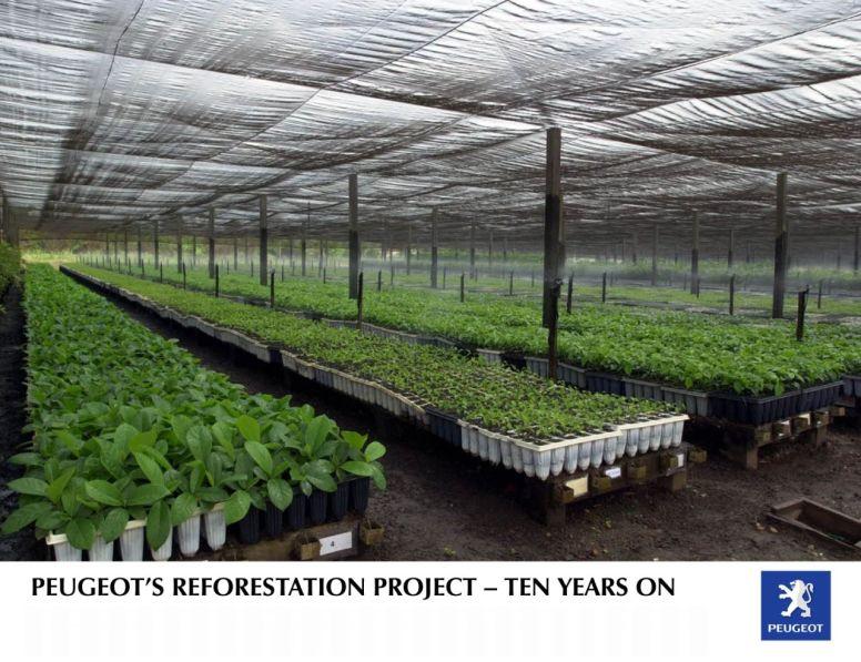 Peugeot celebra el décimo aniversario de su proyecto de reforestación