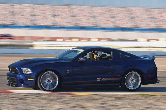 shelby-3