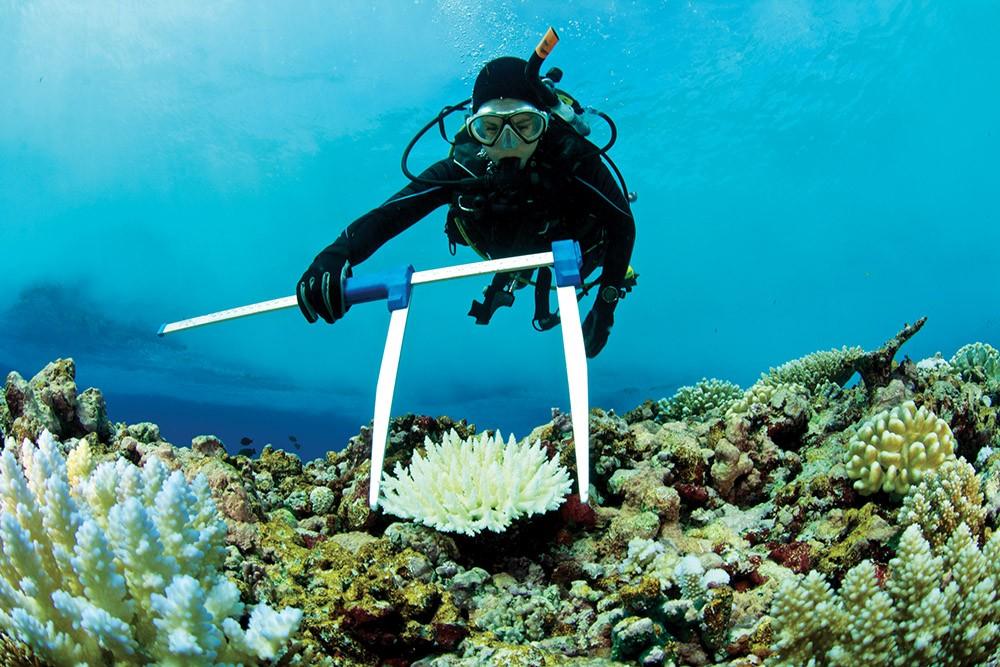 Küresel Isınma denizlerdeki yaşamı da etkiliyor. Bilim insanları, üç boyutlu yazıcılarda üretilen mercan kayalıklarıyla soruna çözüm arıyor.