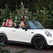 MINI Christmas Tree Transport Advice