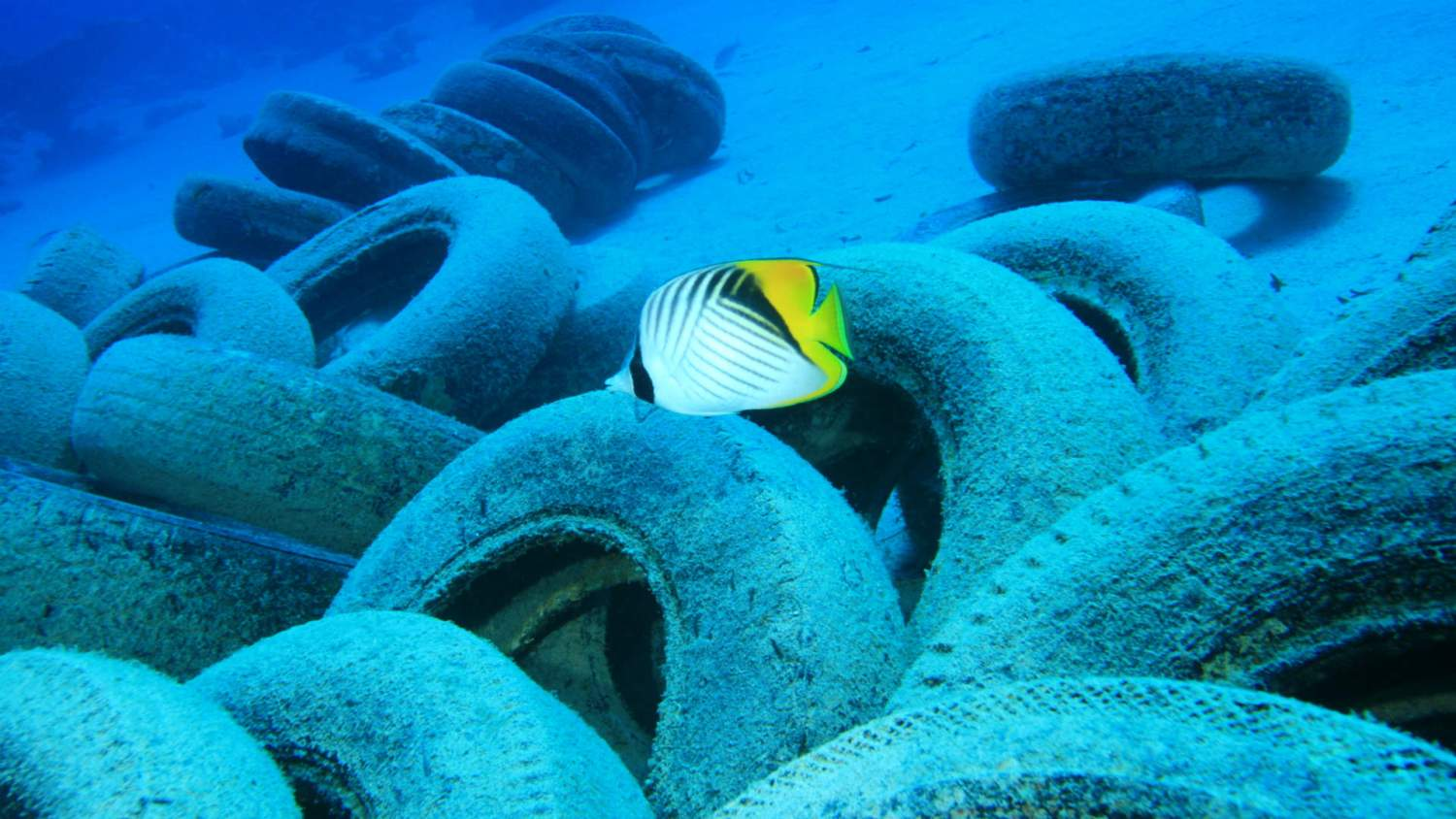 Car tyres a stealthy source of ocean pollution