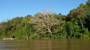 fiume_kinabatangan