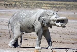 Namibia0238