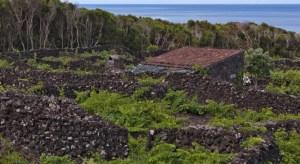 pico_island_vineyard_culture_trekking