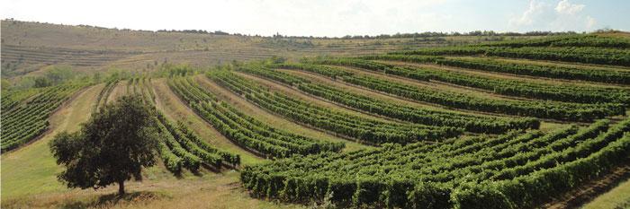 Drumul Vinului