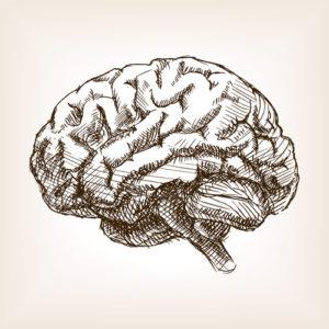 Fig. 1. Cerveau d'un homme ayant consommé de la cervelle. Institut de France.
