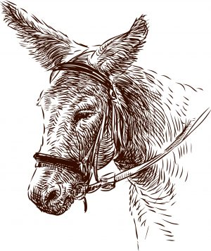 Tuer un âne à coups de figues molles