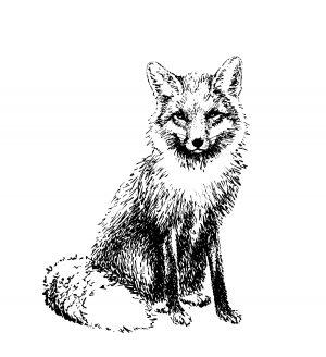 Écorcher le renard