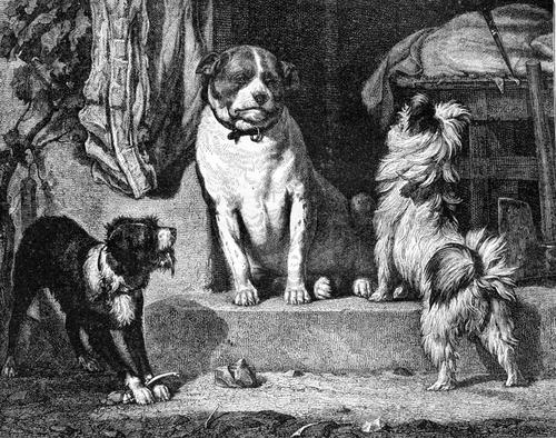 Fourrer le chien [furé le Sjê]