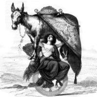Être monté comme un âne [ètre môté kòm ûn- an]