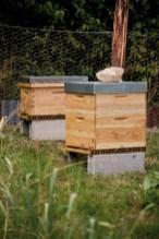 Une vue du rucher