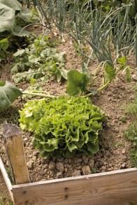 Un bord de butte du Jardin-Potager