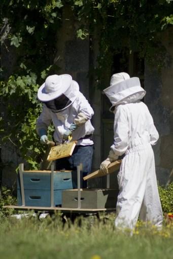 Évacuation des dernières abeilles restées dans les hausses