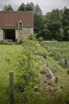 Ligne de poiriers entre Jardin et Potager