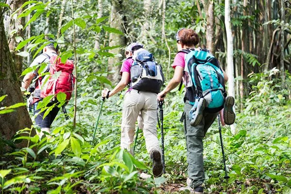 group of three people hiking in a forest