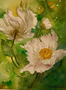 Matilija Eggy Face Poppy - Alisan Andrews