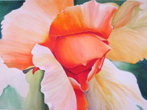 Rose at Gamble Gardens - Linda Curtis