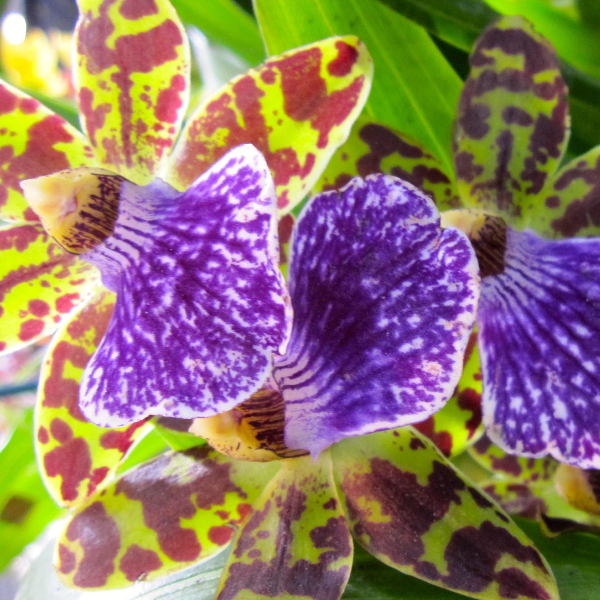 Orchid 3 - Lee Taiz