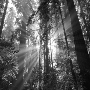 Trail of Light - Karen Asherah