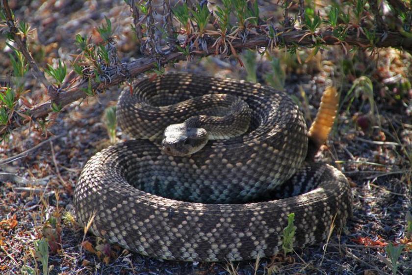 Snake-11APR15