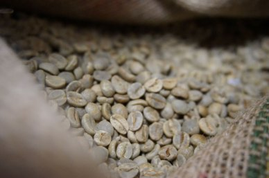 Coffee Beans prior to roasting