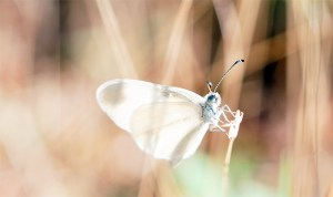 butterfly 78