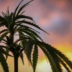 July Cannabis Roundup