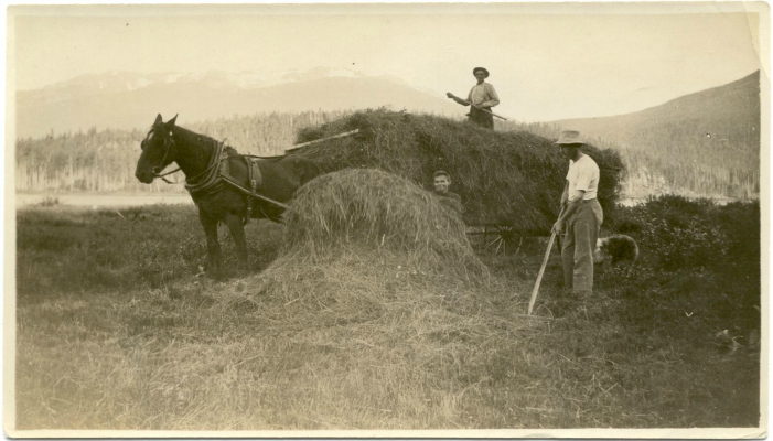 "Haying at Tapley's, 1920s. There was one farm in Whistler called ""Tapley's Farm"". There is still a pub and a residential area called ""Tapley's"" today."
