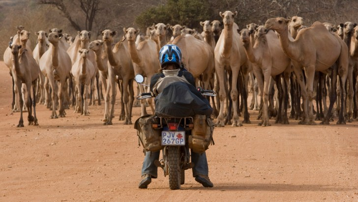 The great camel encounter_Northern Kenya