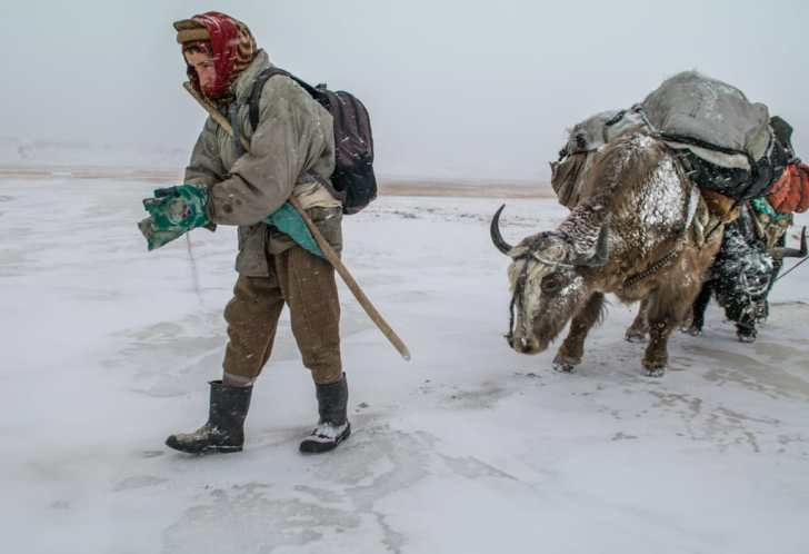 Nomadic herder with yak on frozen river