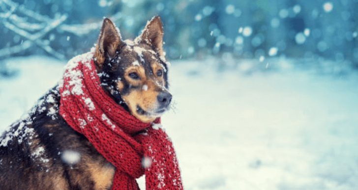 The Farmers Almanac Winter Predictions Have Arrived