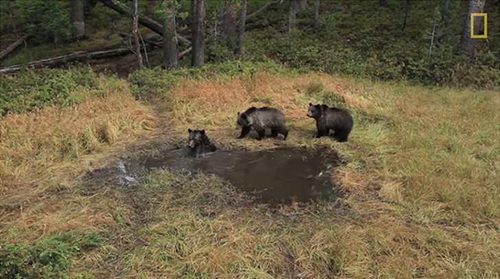 Bear Bathtub in Wyoming