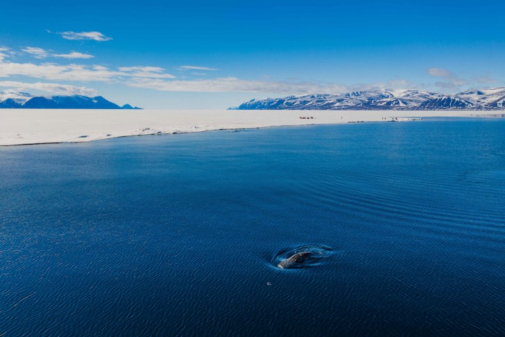 Floe-State-Camping-on-Nunavut-Ice-Narwhal-Colin-Field