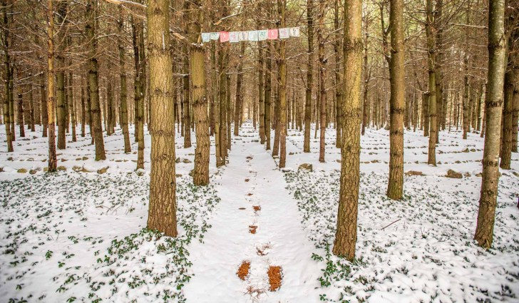 The-Last-Best-Place-Backyard-Exploration-in-a-Pandemic-footprints-in-snow-photo-by-Kristin-Schnelten