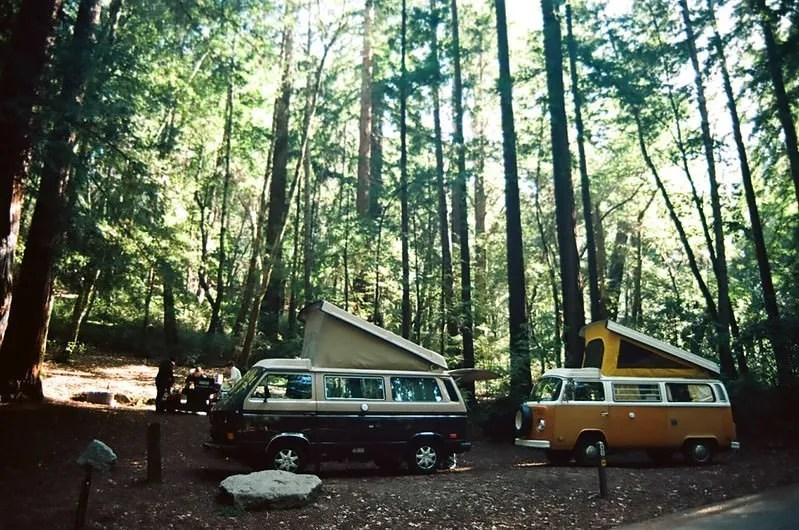 2 vw buses at a campground