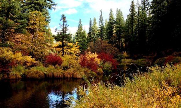 Fall Colors of Plumas County