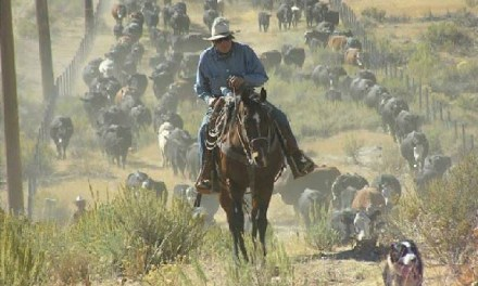 Cattlewomen Work To Preserve A Treasured Way Of Life