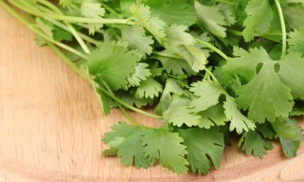 Homemade Cilantro & Lime Dressing Recipe