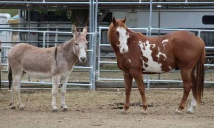 Grazing Grace Horse Rescue Taylorsville, CA