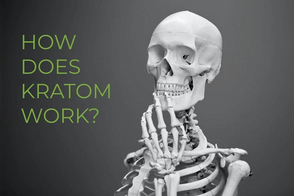 how kratom works