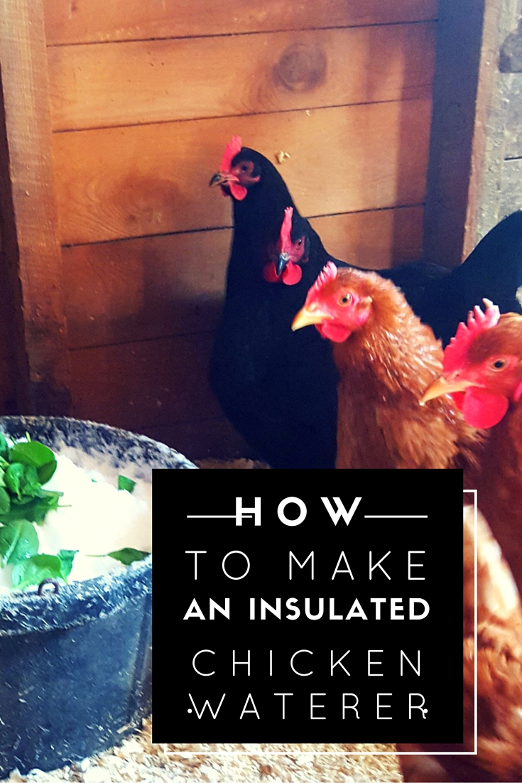 How to Keep Chickens in the Winter Without Electricity – The Insulated Waterer
