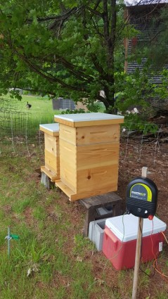 beehives, bees, honey, homestead